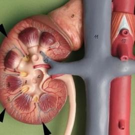 почки у грудничка симптомы