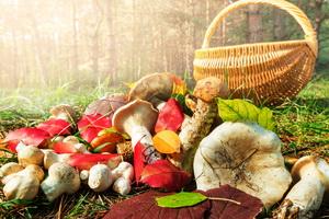 Отравление ядовитыми грибами у детей разного возраста