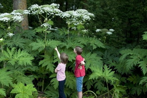 Отравление детей растениями: предотвратить несчастный случай